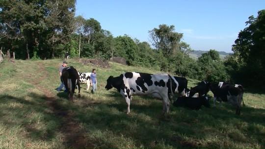 Cooperativismo auxilia pequenos produtores de leite a ampliar e melhorar produção