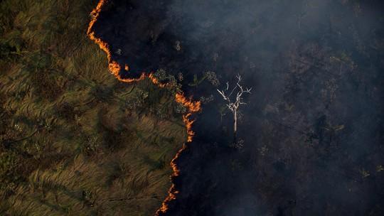 Foto: (Bruno Kelly/Amazonia Real.)