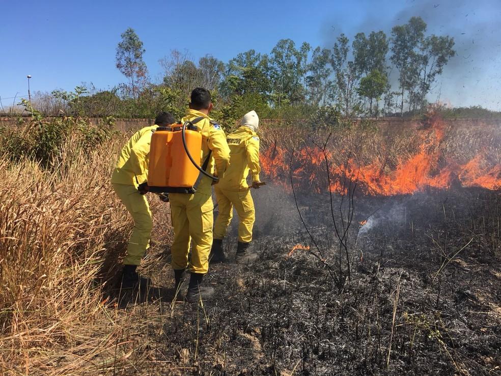 Brigada Municipal já atua contra incêndios em Porto Velho.  — Foto: Reprodução/ Brigada Municipal.