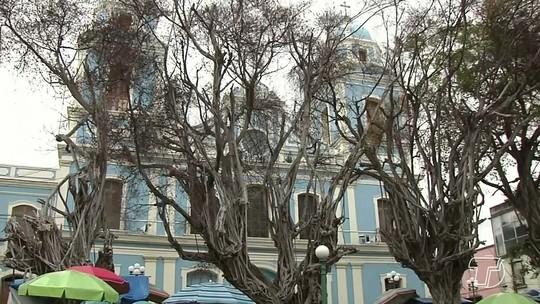Número de queda de árvores centenárias aumenta no período do inverno amazônico