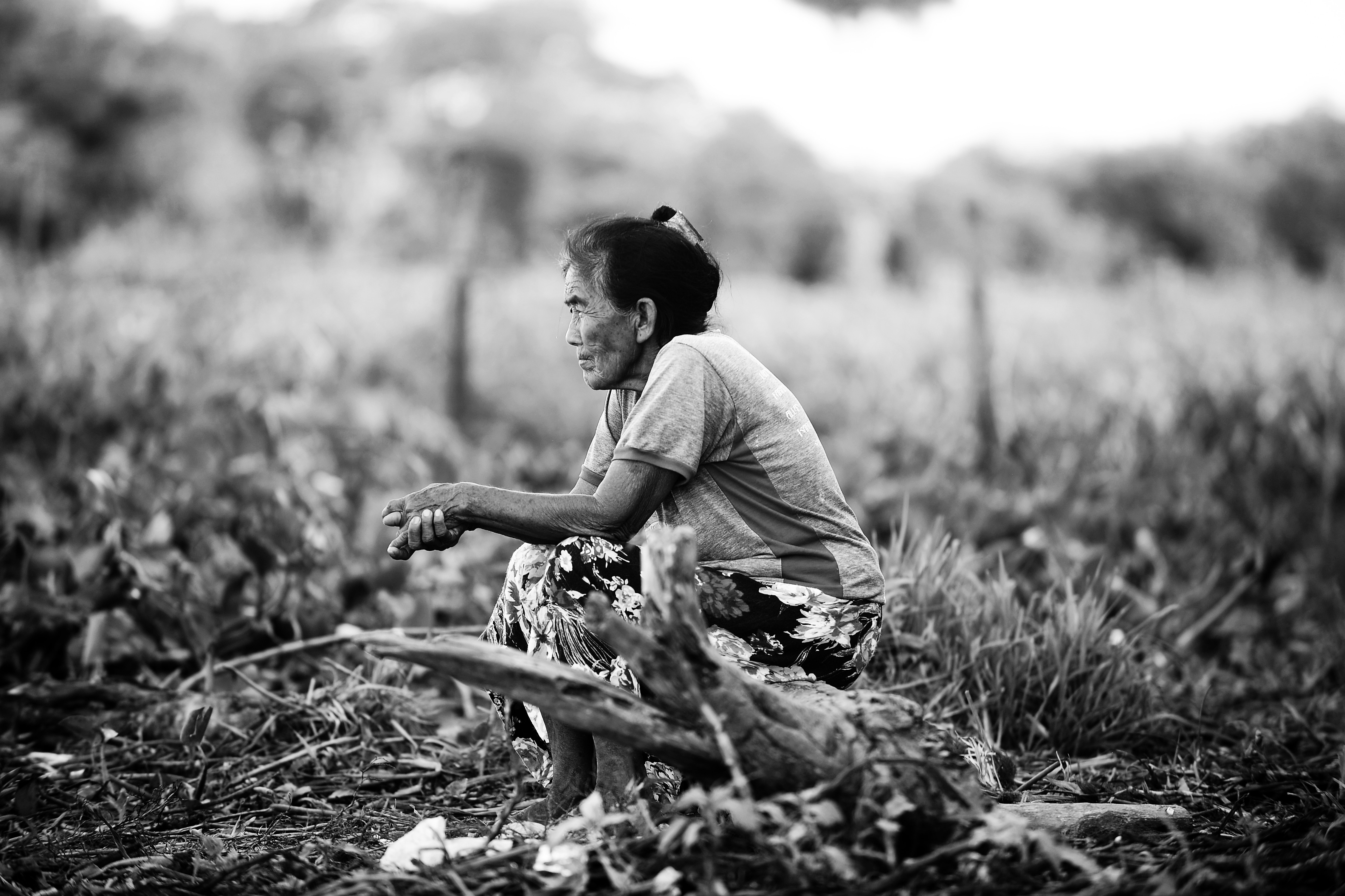 No Dia do Pantanal,  WWF divulga 15 fotos sobre o bioma que são finalistas em concurso - Notícias - Plantão Diário