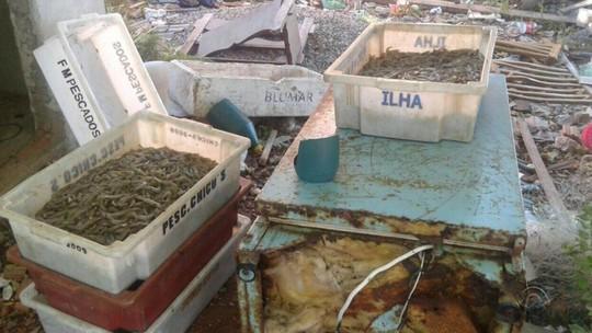 Apesar de expectativa de safra boa de camarão, pesca fora de época preocupa pescadores no RS