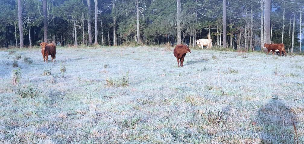 Pastagens ficaram brancas em São Joaquim nas últimas horas do inverno de 2020 — Foto: Mycchel Legnaghi/São Joaquim Online