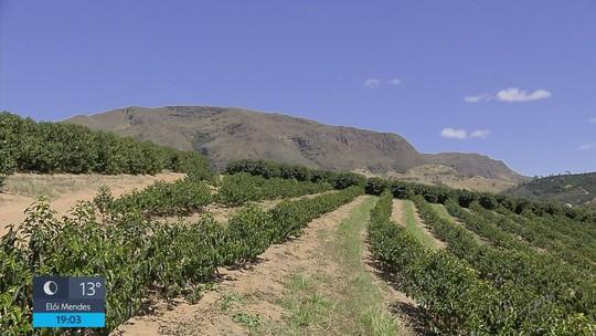 Minas Gerais chega a 1 milhão de hectares de lavouras de café