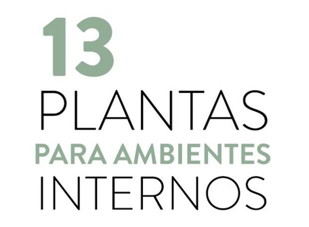 Vídeo: 13 plantas para ambientes internos (Foto: Casa e Jardim)