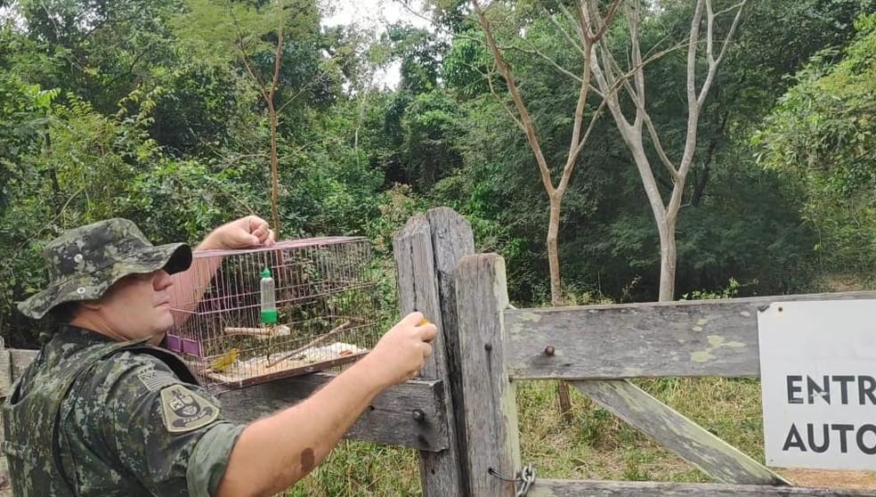 Aves resgatadas em Osvaldo Cruz foram devolvidas à natureza — Foto: Polícia Militar Ambiental