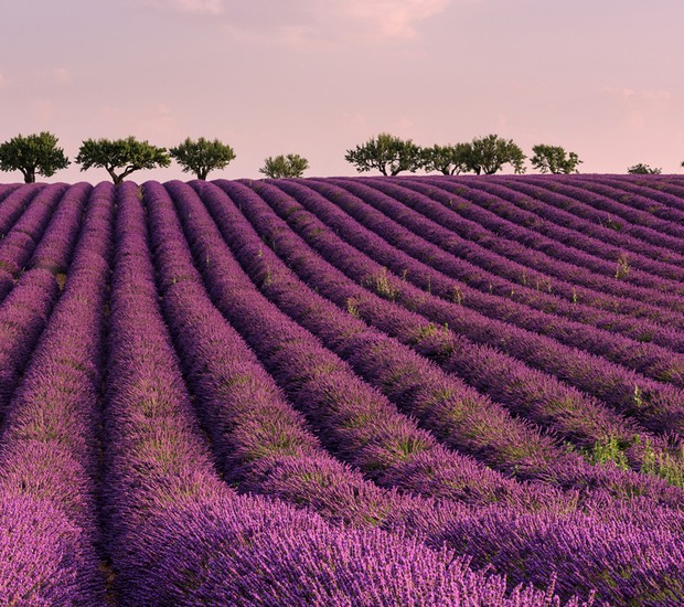 2-lugares-coloridos-lavanda-provenca-franca (Foto: Thinkstock)