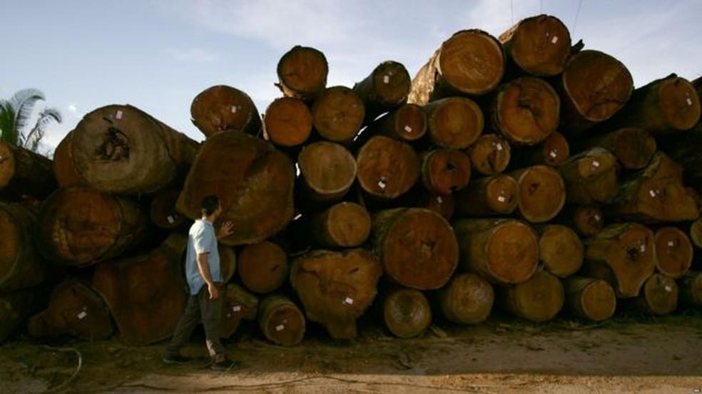 Toras de árvores amazônicas prontas para serem vendidas em depósito próximo ao rio Jamari, em Rondônia. — Foto: BBC