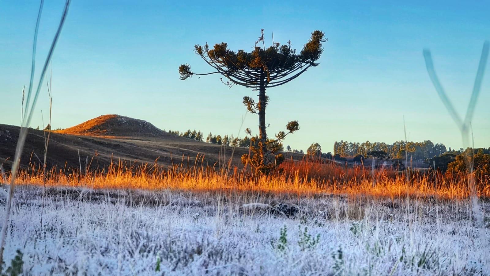 SC amanhece com temperaturas abaixo de -2ºC e geada muda paisagem da Serra; FOTOS