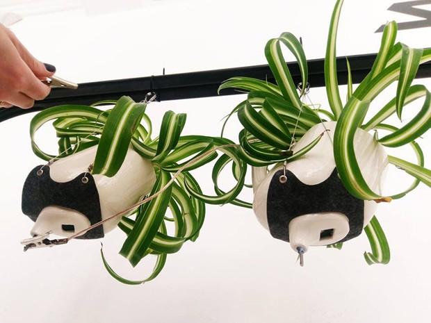 Instalação usa fotossíntese para gerar energia elétrica (Foto: Reprodução)