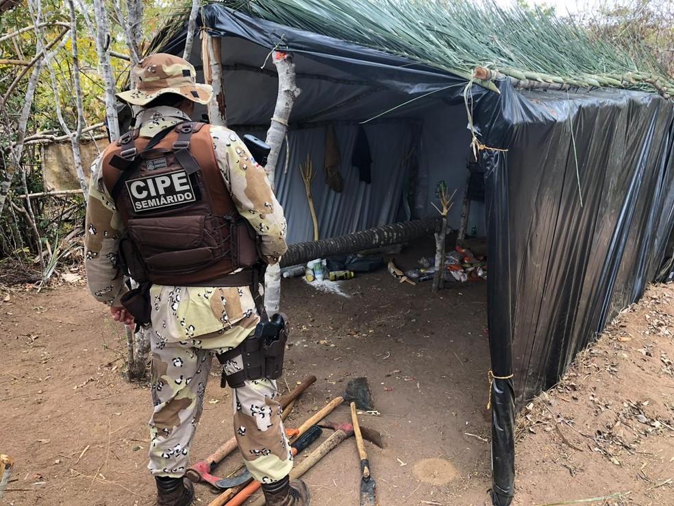 Plantação de maconha com 220 mil pés de maconha na Bahia foi encontrada pela polícia — Foto: Divulgação/SSP-BA