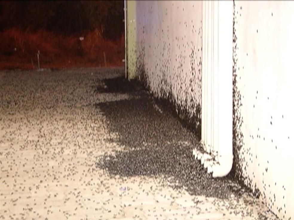 Besouros se acumulam principalmente em espaços externos às residências, próximo a alguma fonte de iluminação — Foto: Reprodução/Inter TV