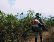 O combate ao fogo no Pantanal a partir de relatos de três mulheres na linha de frente