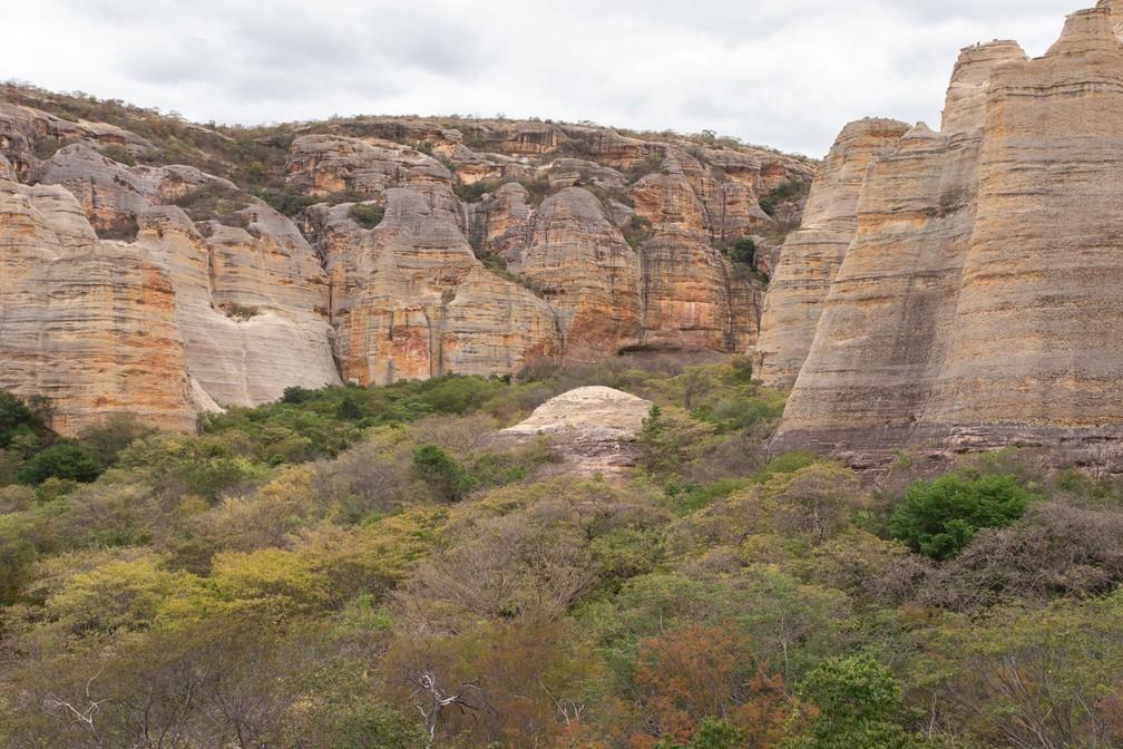 O Parque Nacional da Serra da Capivara reúne espécies de três biomas: além da caatinga, também a Mata Atlântica e a floresta amazônica — Foto: Celso Tavares/G1