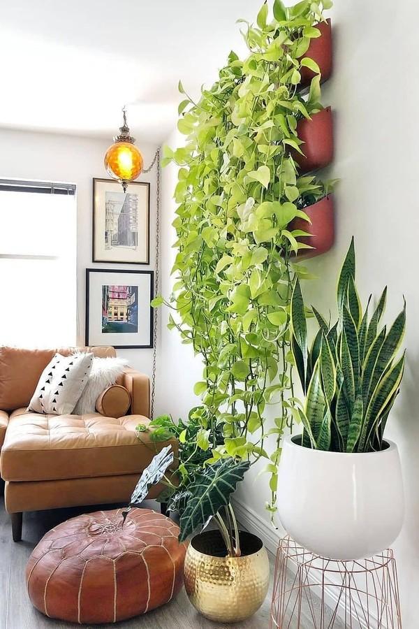 5 plantas que são tendências para a decoração da casa (Foto: Reprodução / Instagram / @theplantjunki)