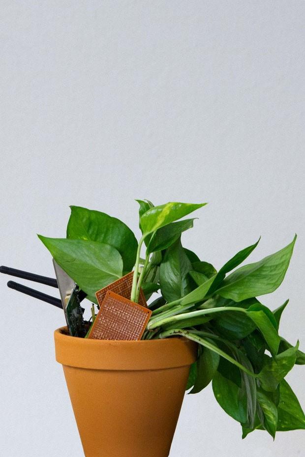 Jovens criam start-up para vender plantas artificiais ligeiramente secas (Foto: Divulgação)