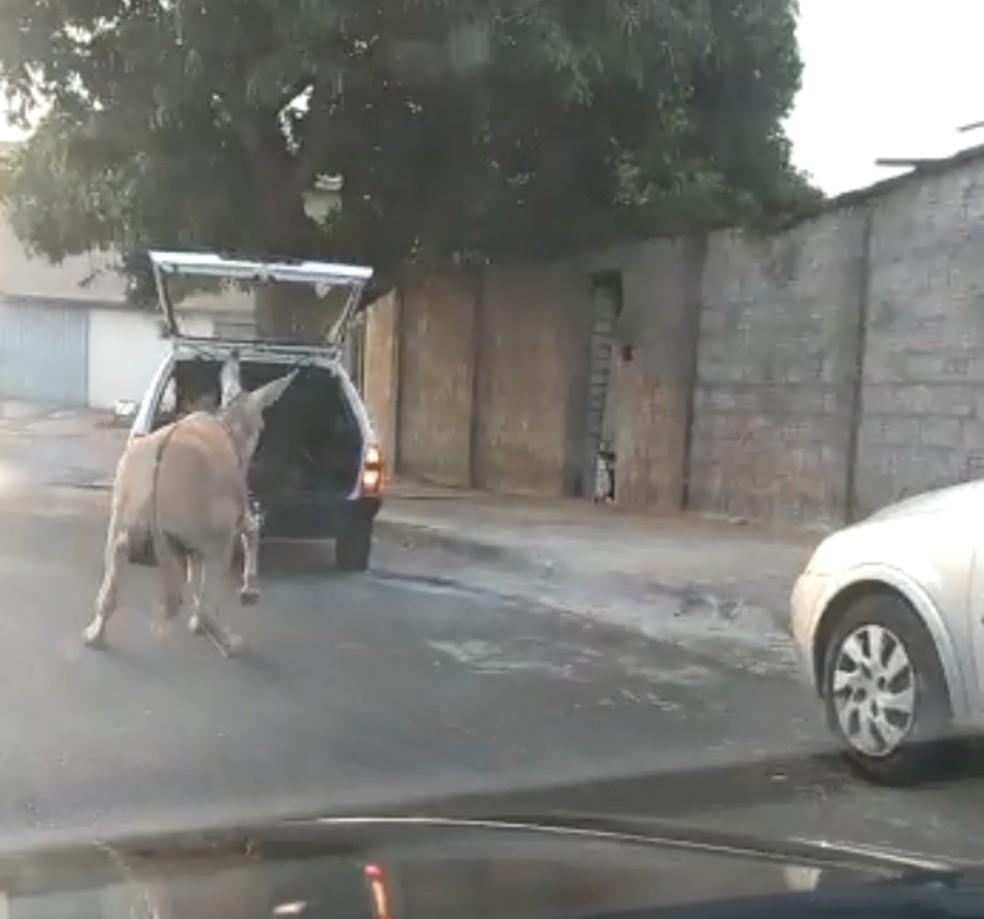 Presidente de ONG registrou boletim de ocorrência por ato de abuso a animais em Dois Córregos — Foto: Arquivo pessoal