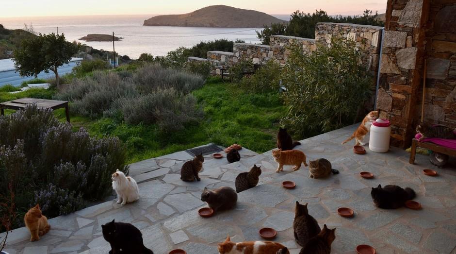 Gatos vivem em um abrigo, numa ilha paradisíaca (Foto: Reprodução)