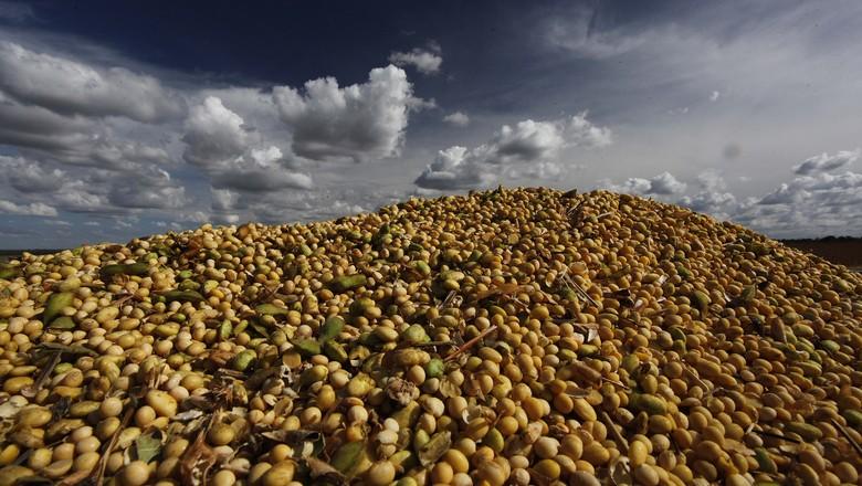 colheita-soja-grao-LUIS-EDUARDO-MAGALHAES-MATOPIBA (Foto: Jonathan Campos/Ag. Gazeta do Povo)