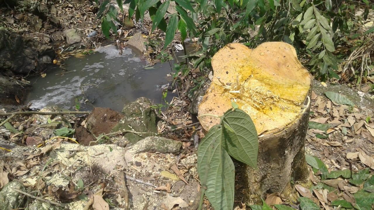 Universidade é autuada por corte e poda ilegal de árvores em APP na Zona Centro-Sul de Manaus - Notícias - Plantão Diário