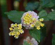 4 plantas tóxicas não indicadas para o cultivo em casa