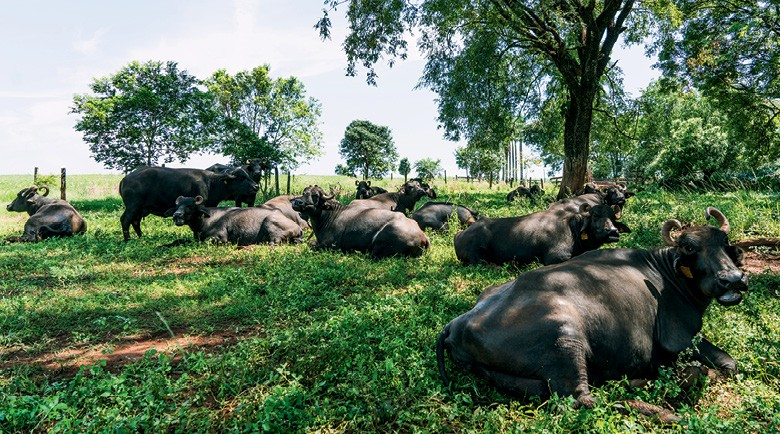 muçarela de búfala (Foto: João Paulo/Divulgação)
