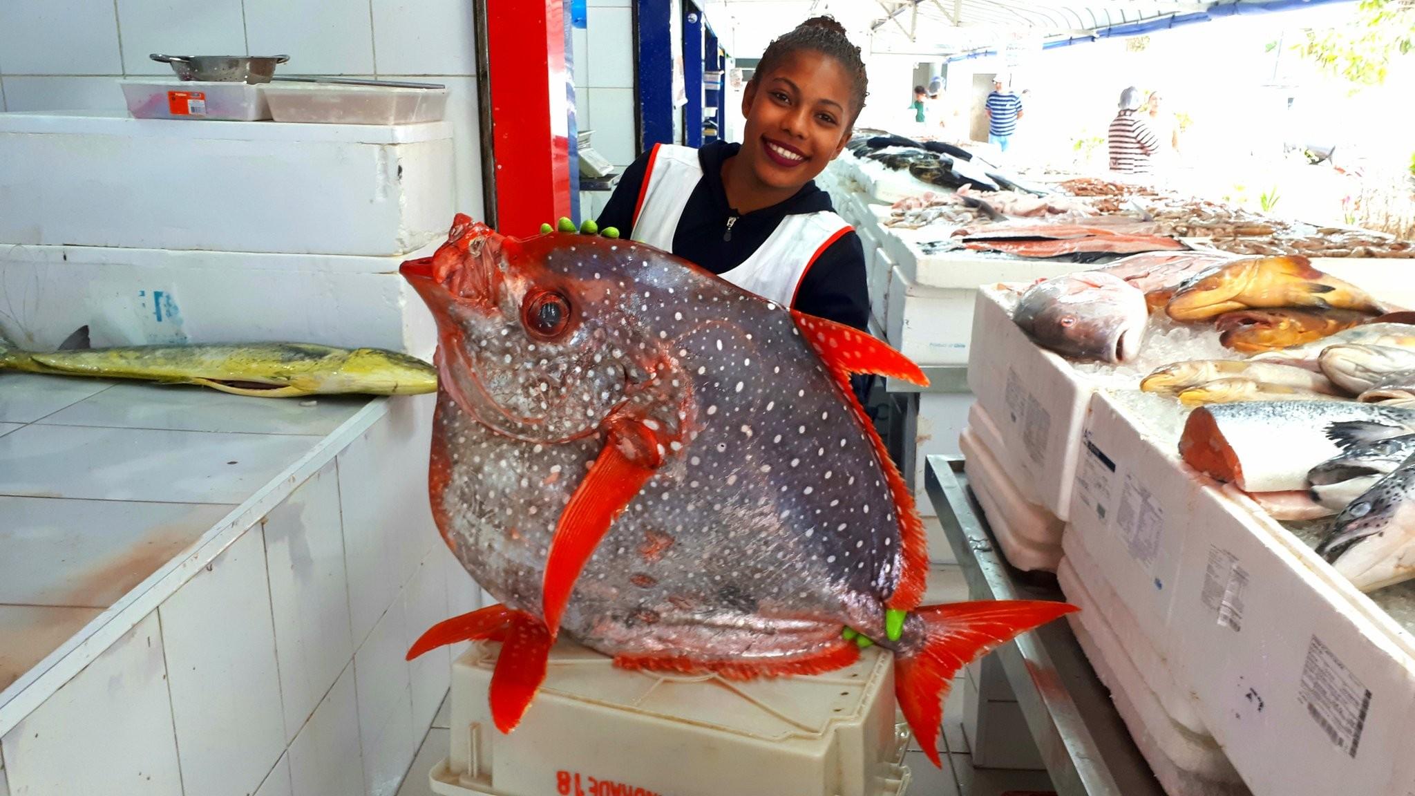 Peixe gigante e de raro 'sangue quente' aparece em SP e intriga especialistas