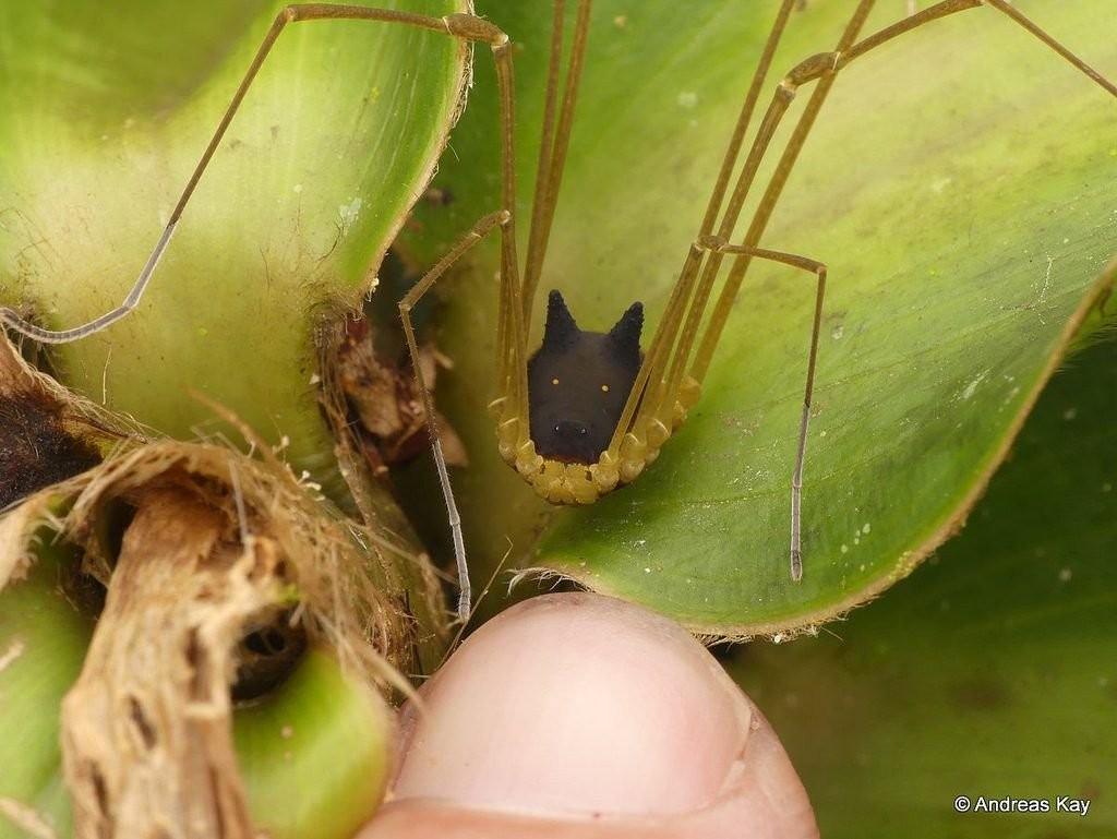 Espécie é encontrada no Equador (Foto: Andreas Kay)