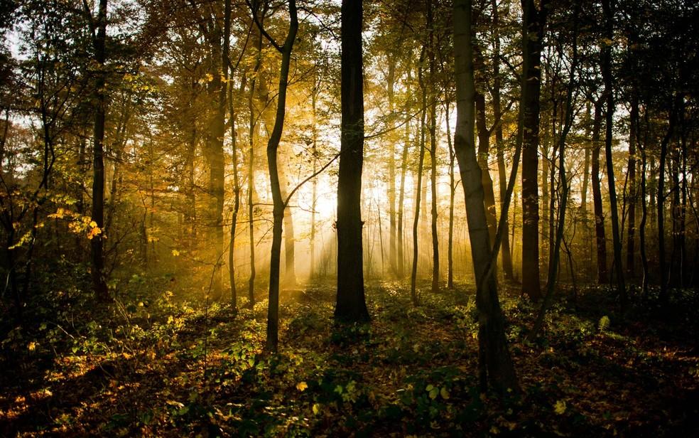 Raios de sol passam por entre as árvores da floresta urbana de Eilenriede em Hannover, na Alemanha — Foto: Julian Stratenschulte/DPA/AP
