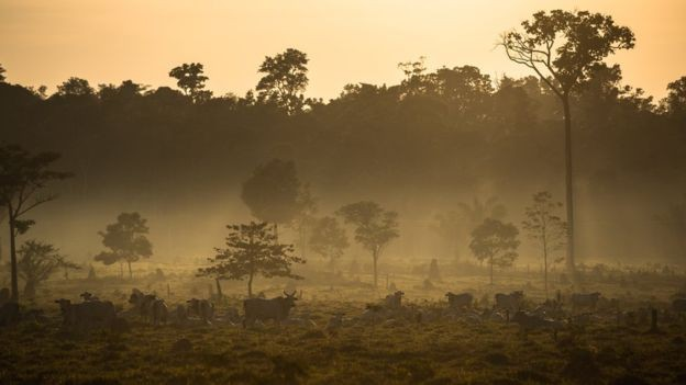 Em Mato Grosso, floresta amazônica dá lugar a pastagens (Foto: THIAGO FORESTI, via BBC News Brasil)
