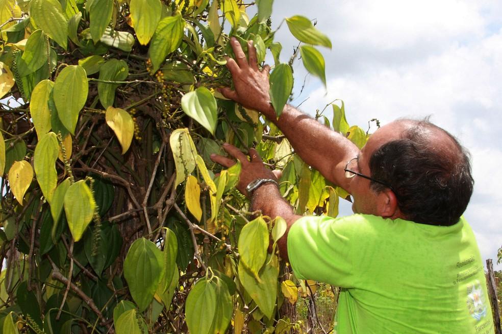 Projeto Alto Arapiuns foi selecionado por edital da Fundação Cargill juntamente com outras nove iniciativas de outras regiões do país (Foto: Agência Pará/Divulgação)