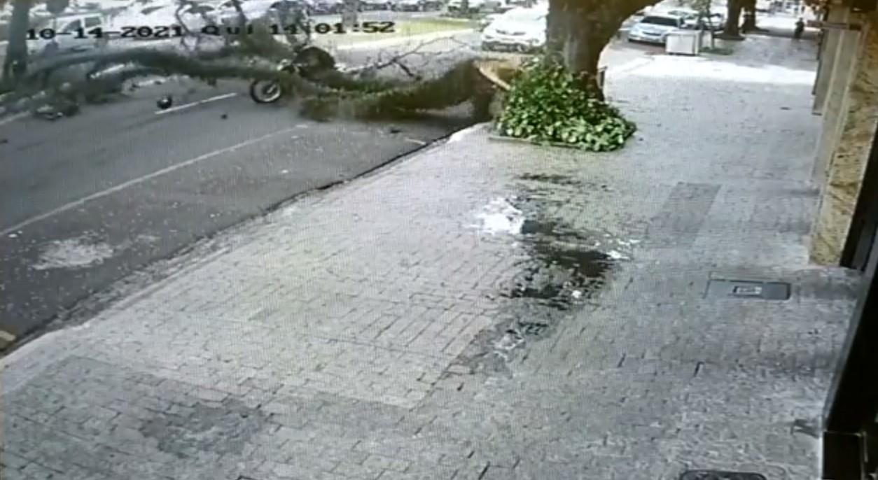 Câmera registra queda de árvore sobre motociclista em Maringá; VÍDEO