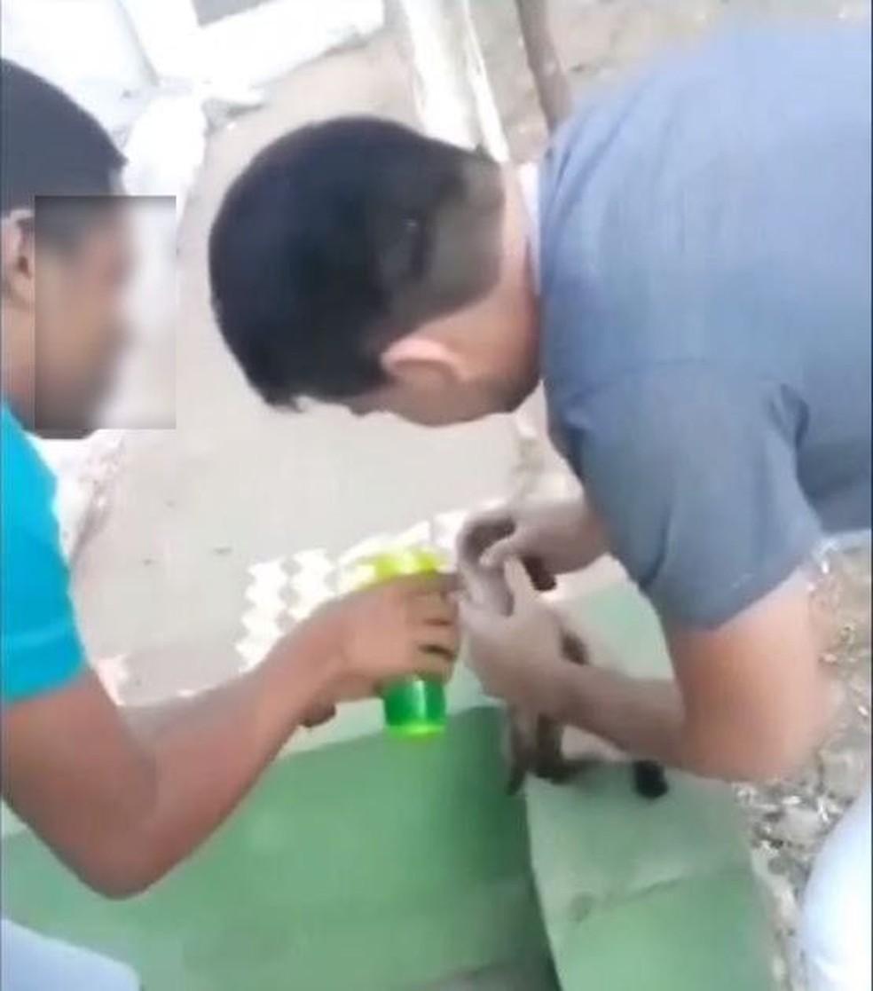 Homens forçam gato a ingerir bebida alcoólica, em Crato, no Ceará. — Foto: Reprodução