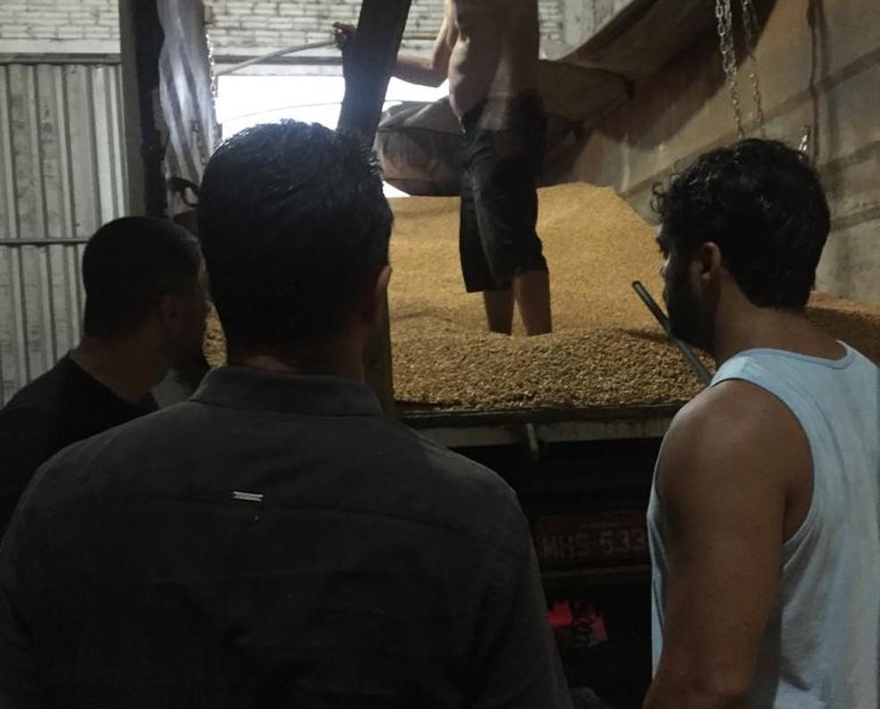 Droga foi localizada em galpão em Araranguá — Foto: Polícia Civil/Divulgação