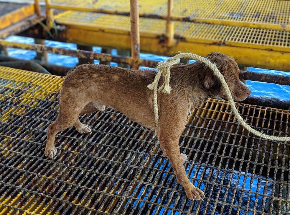 O cão Sobrevivente após o resgate — Foto: FACEBOOK/VITISAK PAYALAW/via REUTERS