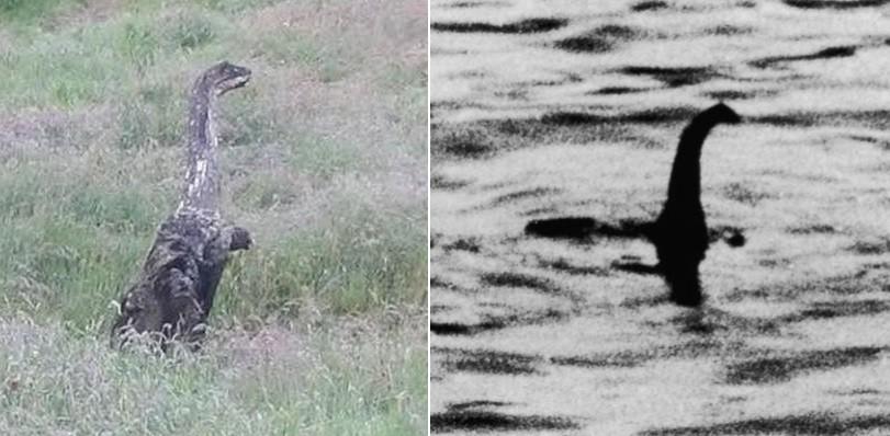 A criatura e o suposto monstro do Lago Ness