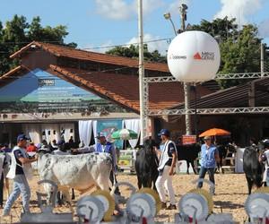 Associação do Girolando anuncia cancelamento da Megaleite 2021