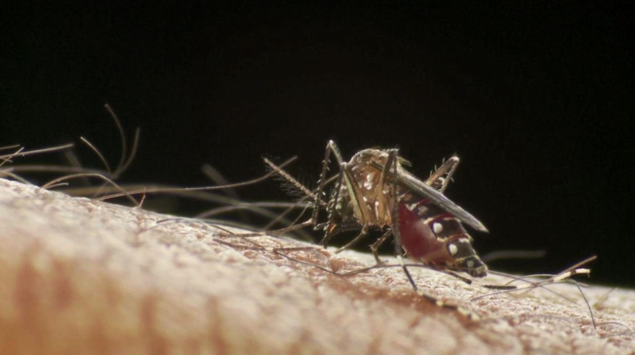 Casos de dengue em Mogi Guaçu aumentam 22% em duas semanas e total de infectados vai a 901