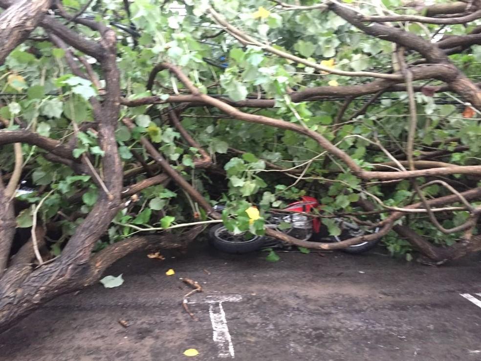 Moto foi atingida pelas árvores que desabaram em Natal (Foto: Maciel Luiz)