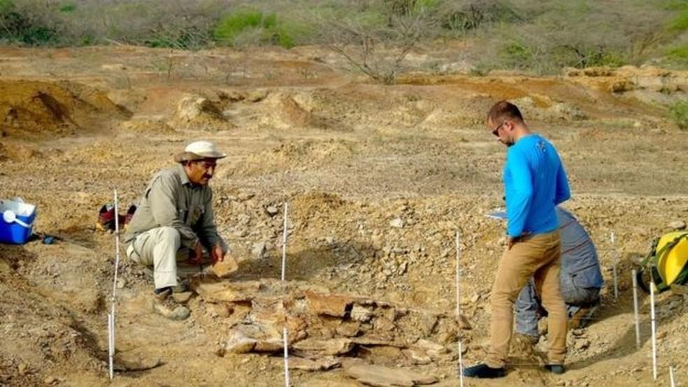 Um dos fósseis foi encontrado pelos paleontologistas na região de Urumaco, na Venezuela — Foto: Reuters/BBC
