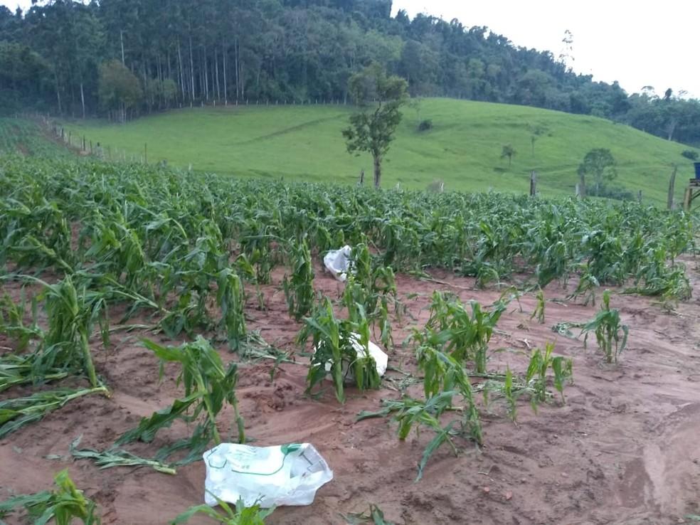 Cerca de 70% da área agrícola de Aurora registrou estragos causados pelo temporal, segundo secretário da Agricultura — Foto: Almir Serafim/Prefeitura de Aurora