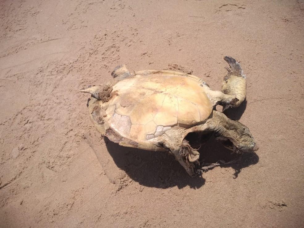 Tartaruga é encontrada morta em praia de Ilhéus, no sul da Bahia — Foto: Projeto (A)mar