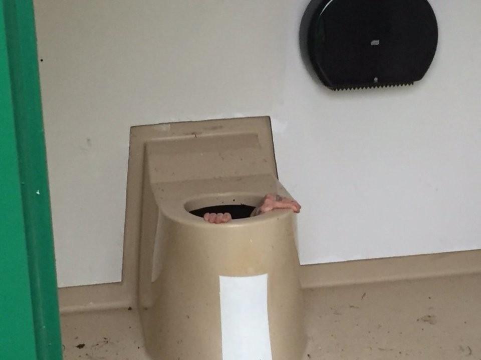 As mãos de Cato para fora do vaso sanitário