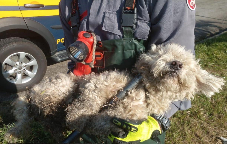 Cachorro é abandonado na Dutra, cai em bueiro e é resgatado pelos bombeiros em Aparecida