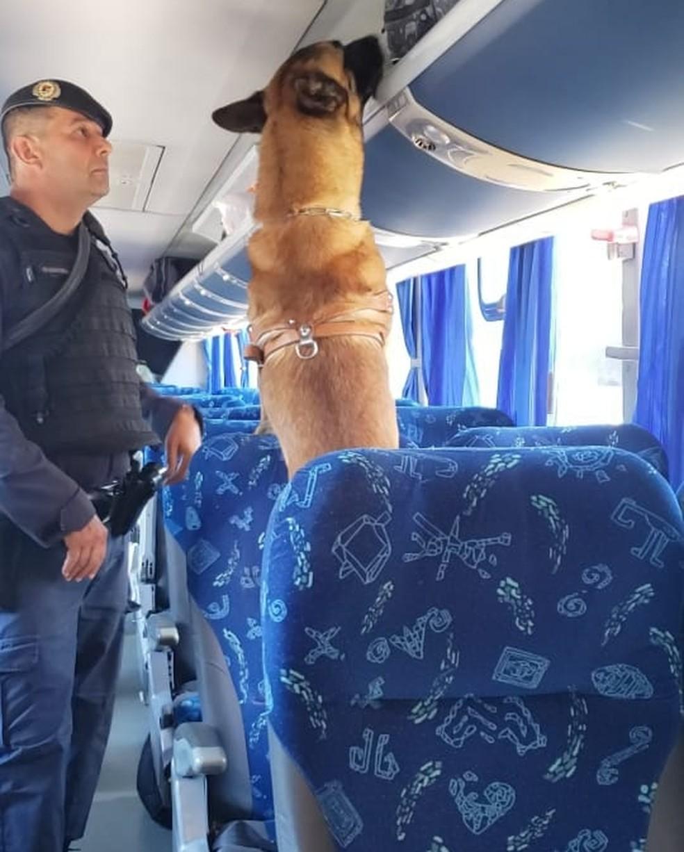 Cão da GM de Jundiaí encontrou arma em ônibus — Foto: Guarda Municipal/Divulgação