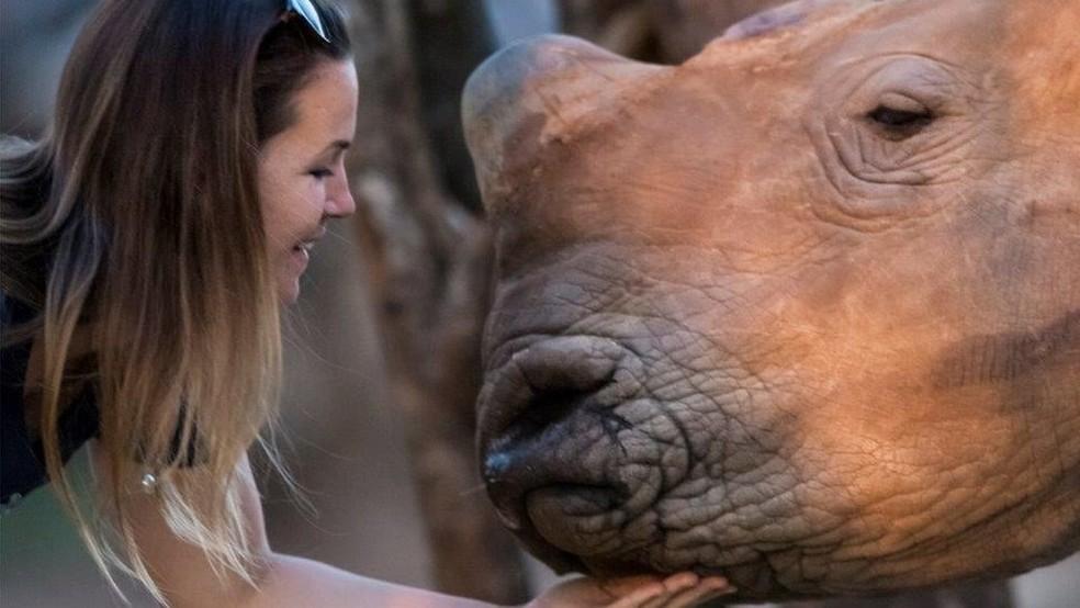 Veterinária faz carinho em rinoceronte cuidado pela organização Rhino Revolution, na África do Sul (Foto: Neil Aldridge)