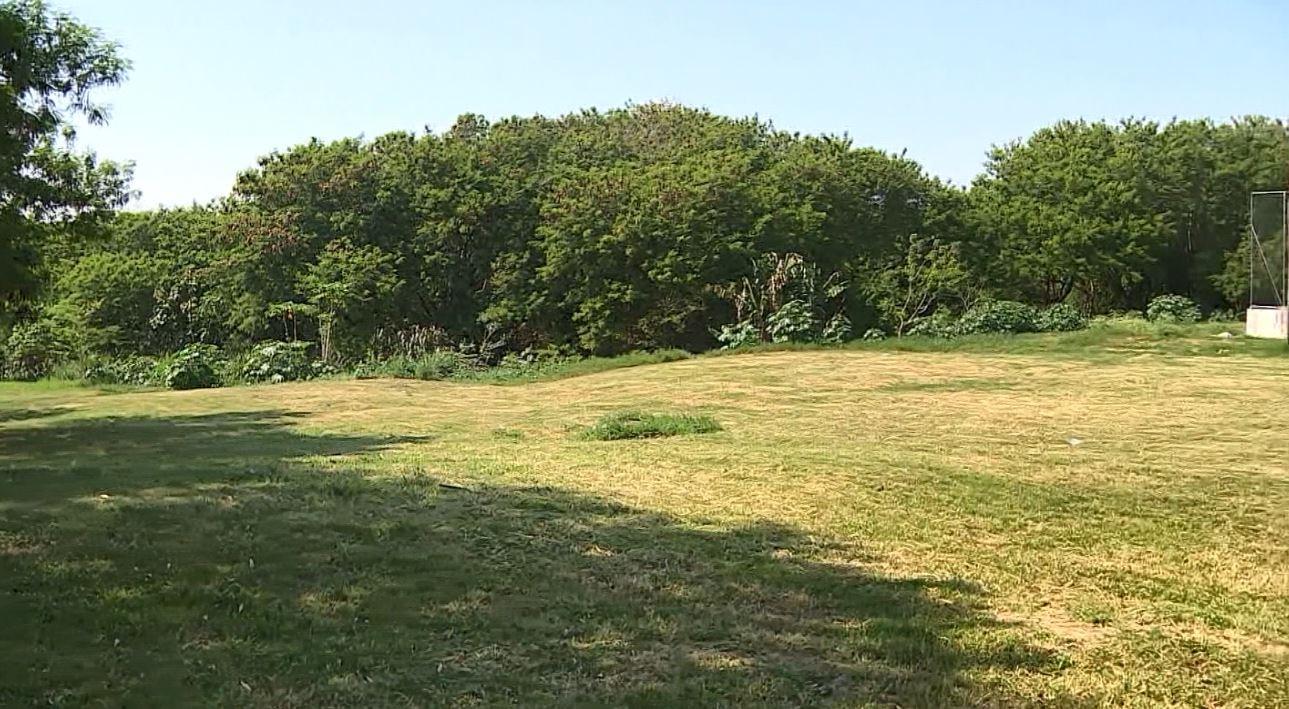 Hortolândia tem menor índice de área com floresta nativa entre as cidades da região de Campinas - Notícias - Plantão Diário