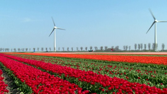 Glória Maria revela a beleza da primavera na Holanda