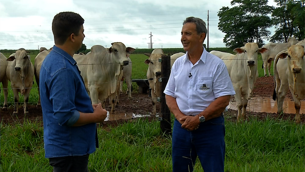 Fazenda em MT investe no melhoramento genético da raça nelore e faz o monitoramento de cada animal