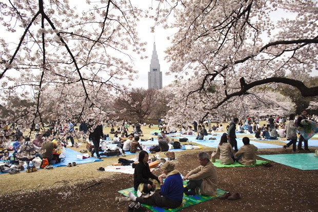 TOKYO - APRIL 10:   Visitors gather under cherry blossoms trees at Shinjuku Gyoen National Garden on April 10, 2011 in Tokyo, Japan. The 9.0 magnitude strong earthquake struck offshore on March 11 at 2:46pm local time, triggering a tsunami wave of up to t (Foto: Getty Images)